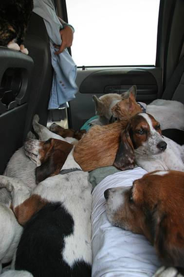 Cat and dogs cuddling
