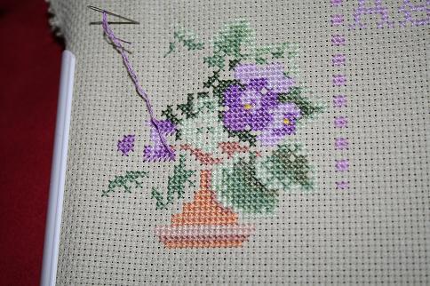 African Violet sampler-violet #1