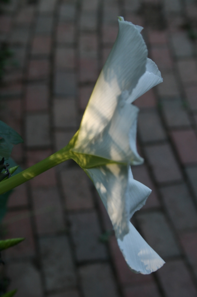 I'm Being Followed by a Moonflower... (6/6)