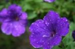 Summer_2012 009