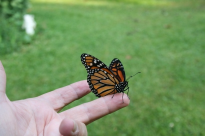butterfly8_13 003