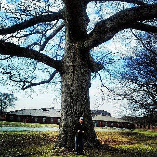 Mighty oaks of Maryland and other things (1/6)