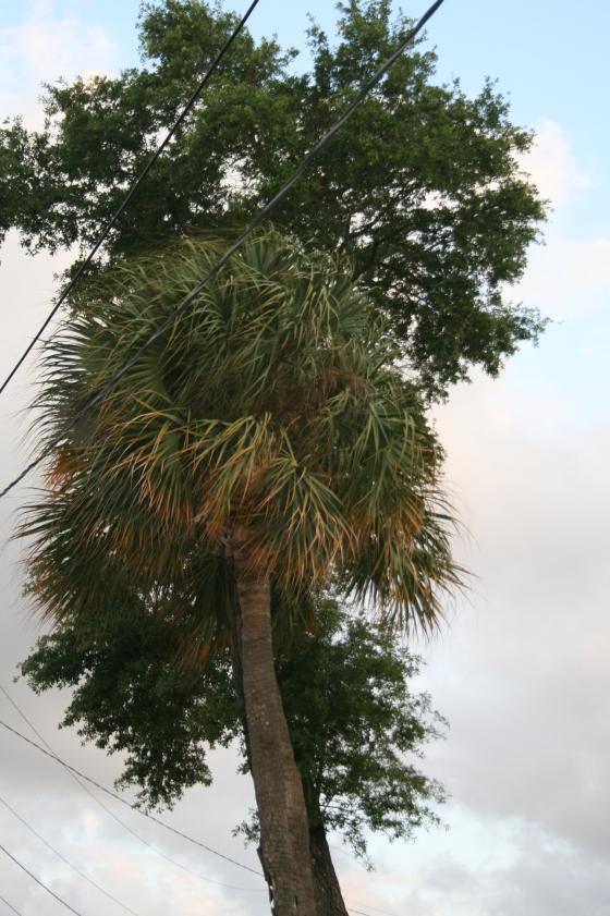Florida14 021