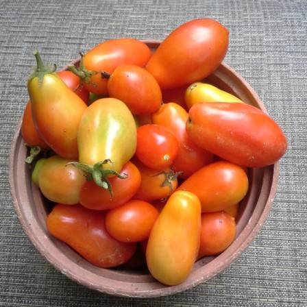 tomatoes14