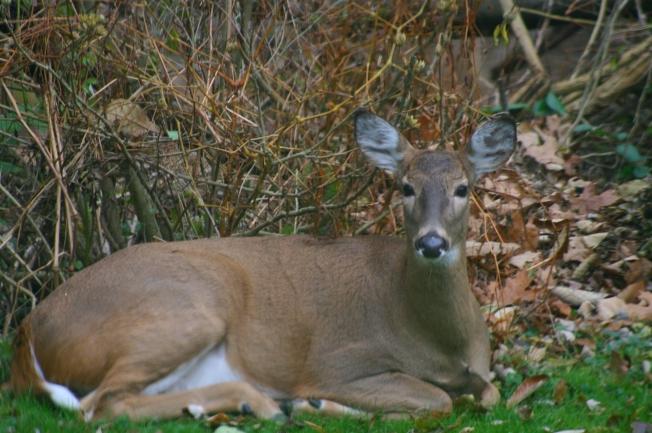 deer14emb